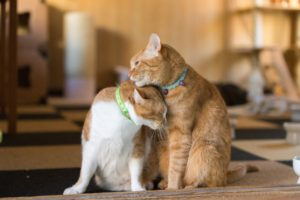 【ペット It's!】ペット保険の選び方のポイントを大公開!